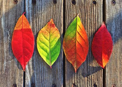 aki_leaf