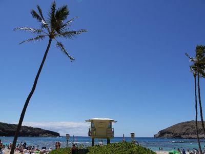 panto_hawaii